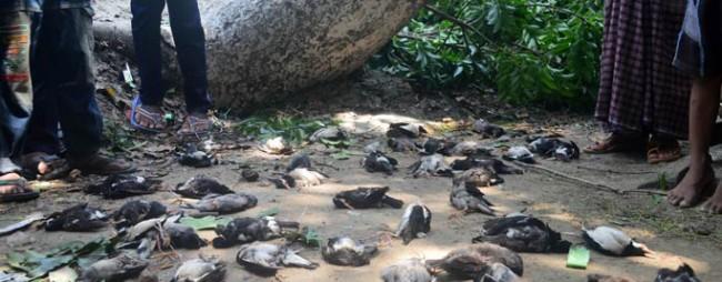 Storm kills 5,000 birds in Jessore