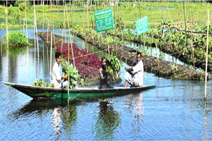 Landless farmers double in three decades: BIDS study